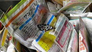 0531蝶.jpg