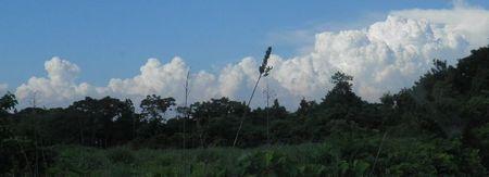 0625積乱雲.jpg