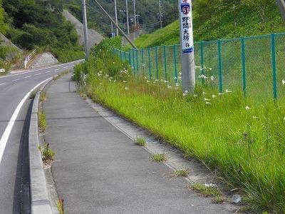 0818鉄砲ユリ.jpg