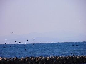 1225海鳥1.jpg
