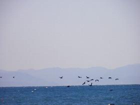 1225海鳥2.jpg